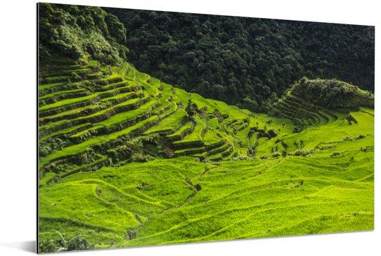 Zonnige dag boven de Rijstterrassen van Banaue in de Filipijnen Aluminium 90x60 cm - Foto print op Aluminium (metaal wanddecoratie)