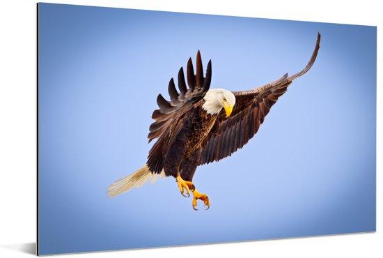 Een Amerikaanse zeearend in een blauwe lucht Aluminium 180x120 cm - Foto print op Aluminium (metaal wanddecoratie) XXL / Groot formaat!