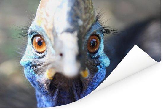 Een blauwe Emoe kijkt recht in de camera Poster 90x60 cm - Foto print op Poster (wanddecoratie woonkamer / slaapkamer)
