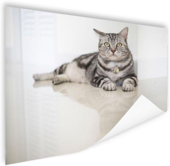 bol | amerikaanse korthaar kat poster 60x40 cm - foto print op