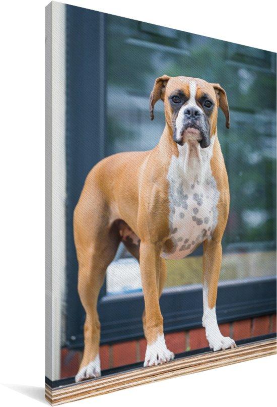 Sportieve Boxer houdt de wacht Canvas 40x60 cm - Foto print op Canvas schilderij (Wanddecoratie woonkamer / slaapkamer) / Huisdieren Canvas Schilderijen