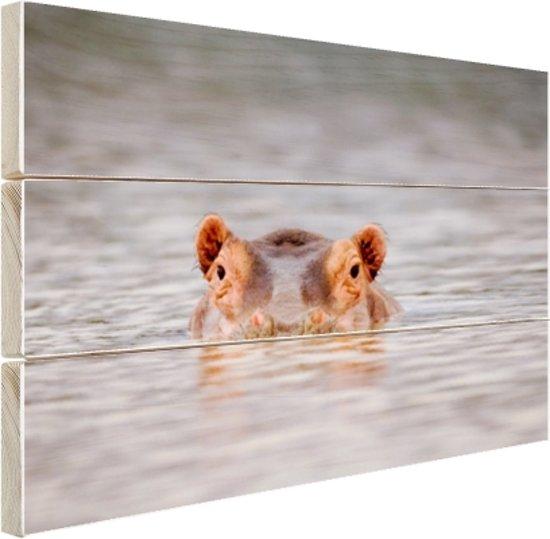 Nijlpaard close-up boven water Hout 80x60 cm - Foto print op Hout (Wanddecoratie)