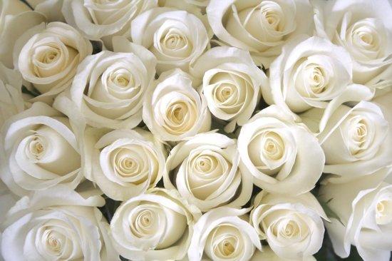 Fotobehang 7 Banen Digitale druk - Witte rozen - speciaal Fotobehang materiaal - Art. 97326