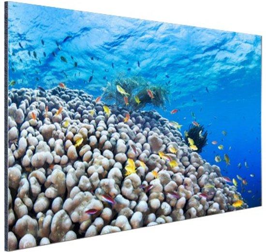 Onderwater rif met vissen Aluminium 60x40 cm - Foto print op Aluminium (metaal wanddecoratie)