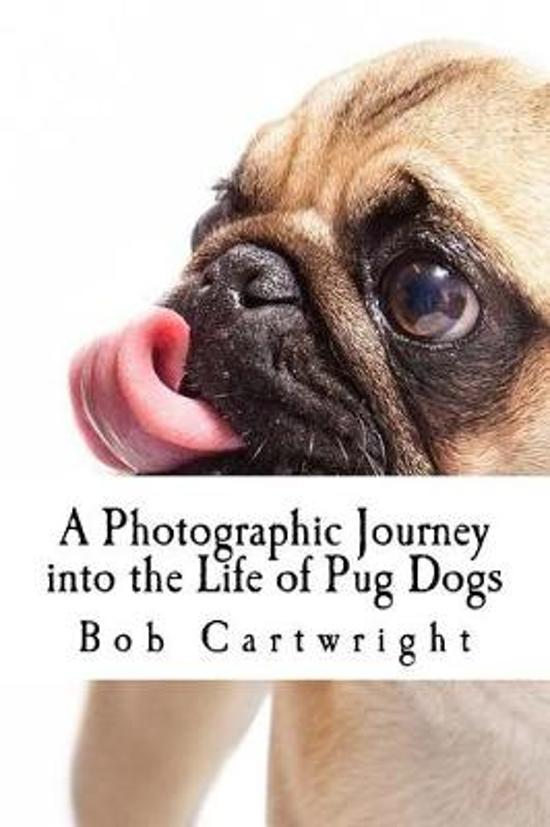A Photographic Journey Into the Life of Pug Dogs