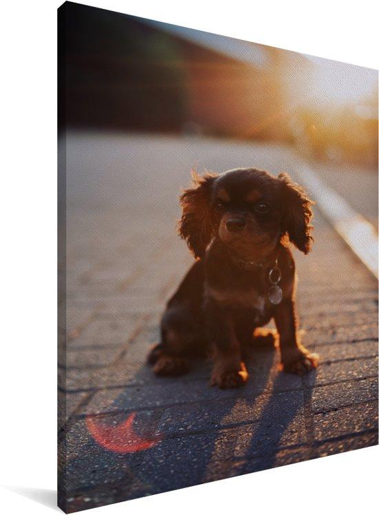 Zonnestralen over de Cavalier King Charles-spaniël puppy Canvas 30x40 cm - klein - Foto print op Canvas schilderij (Wanddecoratie woonkamer / slaapkamer) / Huisdieren Canvas Schilderijen