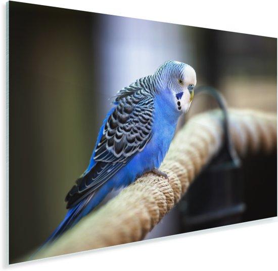 Knalblauwe parkiet op een dik touw Plexiglas 60x40 cm - Foto print op Glas (Plexiglas wanddecoratie)