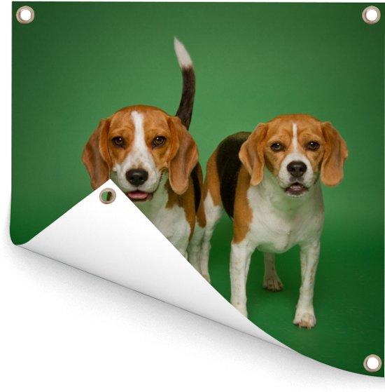Twee mooie Beagles op een groene achtergrond Tuinposter 100x100 cm - Tuindoek / Buitencanvas / Schilderijen voor buiten (tuin decoratie)