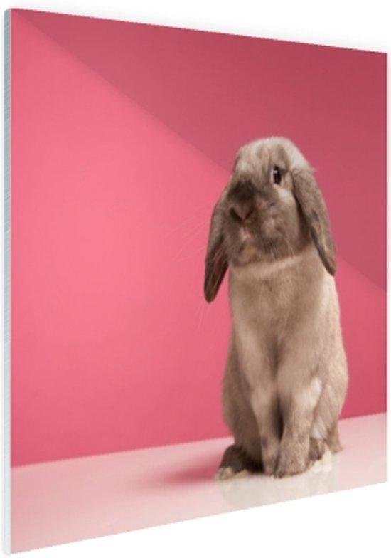Konijnen voor roze muur Glas 60x40 cm - Foto print op Glas (Plexiglas wanddecoratie)