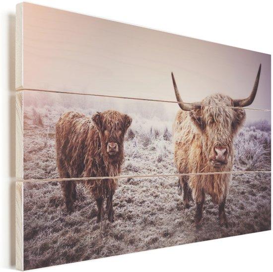 Portret van twee Schotse hooglanders Vurenhout met planken 30x20 cm - klein - Foto print op Hout (Wanddecoratie)