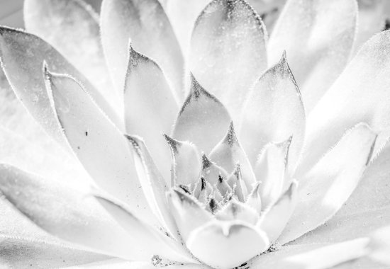 Fotobehang  Nature Plant Black White | XXXL - 416cm x 254cm | 130g/m2 Vlies