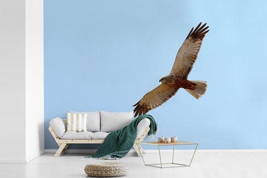 Fotobehang vinyl - Bruine kiekendief tijdens de vlucht met een blauwe hemel breedte 360 cm x hoogte 240 cm - Foto print op behang (in 7 formaten beschikbaar)
