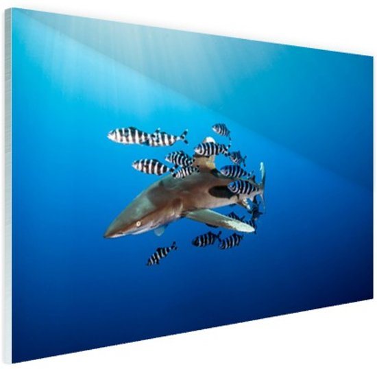 Haai met vissen Glas 180x120 cm - Foto print op Glas (Plexiglas wanddecoratie) XXL / Groot formaat!