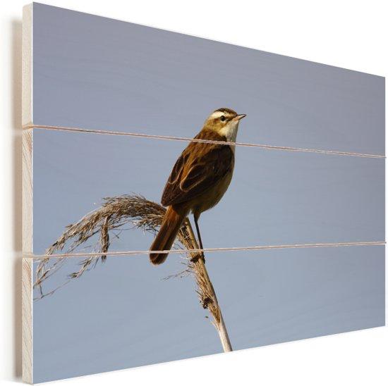 Een rietzanger kijkt uit over de landschappen Vurenhout met planken 30x20 cm - klein - Foto print op Hout (Wanddecoratie)