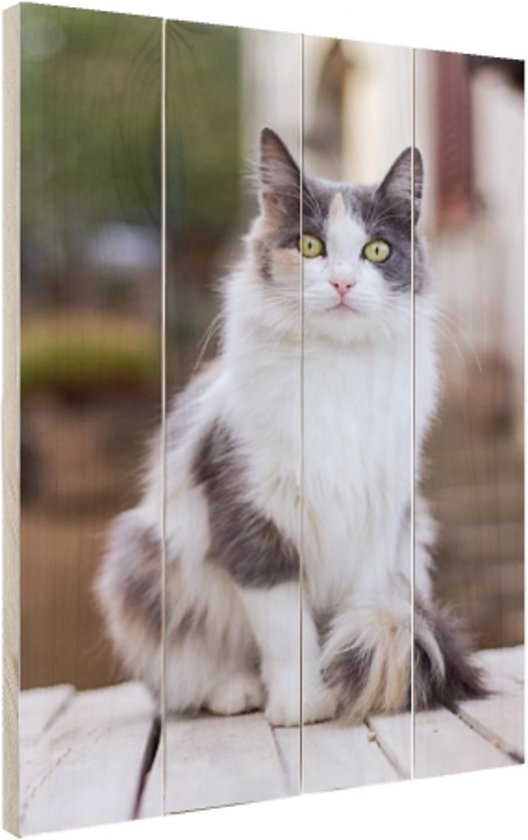 Portretfoto wit-grijze kat Hout 20x30 cm - klein - Foto print op Hout (Wanddecoratie)