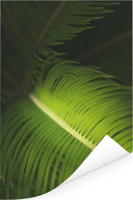 Een close-up van een lichtgekleurde adelaarsvaren Poster 40x60 cm - Foto print op Poster (wanddecoratie woonkamer / slaapkamer)
