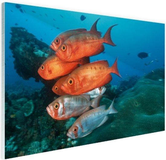 Rode en grijze vissen bij Zuid-Afrika Glas 120x80 cm - Foto print op Glas (Plexiglas wanddecoratie)