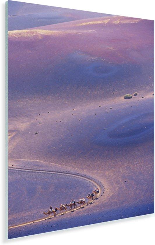 Luchtfoto van kamelen in het Nationaal park Timanfaya op Lanzarote Plexiglas 60x90 cm - Foto print op Glas (Plexiglas wanddecoratie)