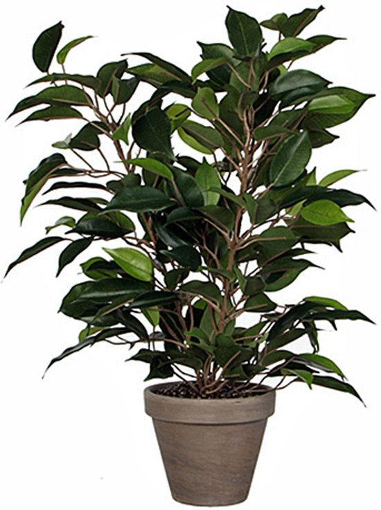 mica decorations ficus natasja groen h 40cm d 30cm in bloempot grijs. Black Bedroom Furniture Sets. Home Design Ideas