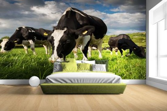 FotoCadeau.nl - Drie Holstein koeien Fotobehang 380x265