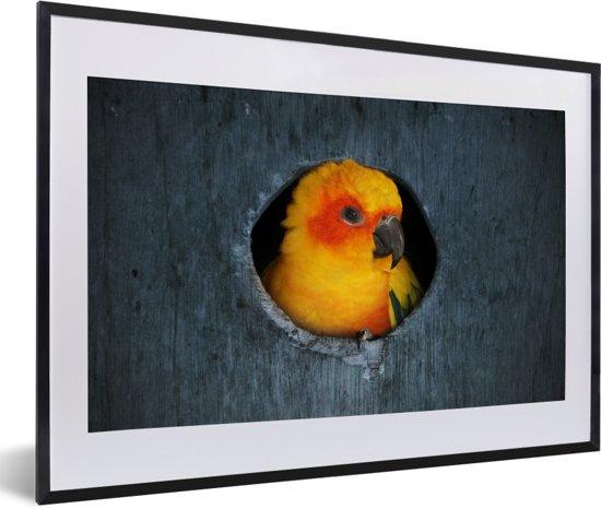 Foto in lijst - Een Zonparkiet zit in een nest in een boom fotolijst zwart met witte passe-partout 60x40 cm - Poster in lijst (Wanddecoratie woonkamer / slaapkamer)