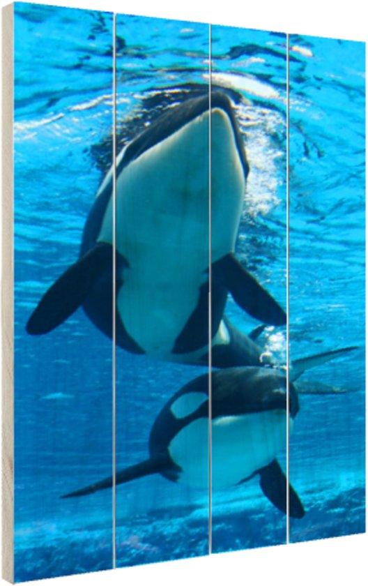 Twee orkas onder water Hout 40x60 cm - Foto print op Hout (Wanddecoratie)