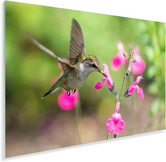 Robijnkeelkolibrie zweeft naast een wilde roze bloem Plexiglas 30x20 cm - klein - Foto print op Glas (Plexiglas wanddecoratie)