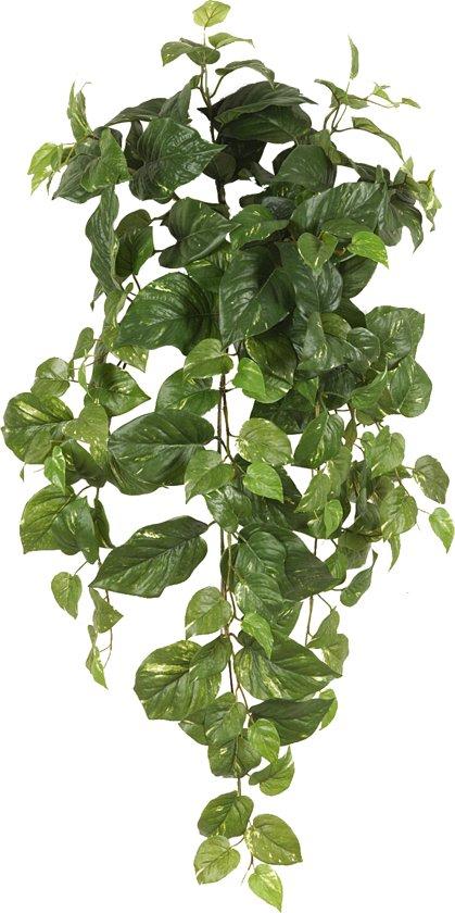 Emerald -  Hangplant scindapsus - 70 cm - Groen
