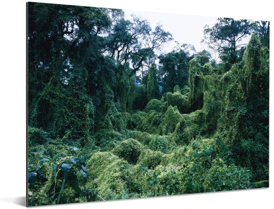 Cluse-up van de Jungle in het nationaal park Calilegua in Argentinië Aluminium 160x120 cm - Foto print op Aluminium (metaal wanddecoratie) XXL / Groot formaat!