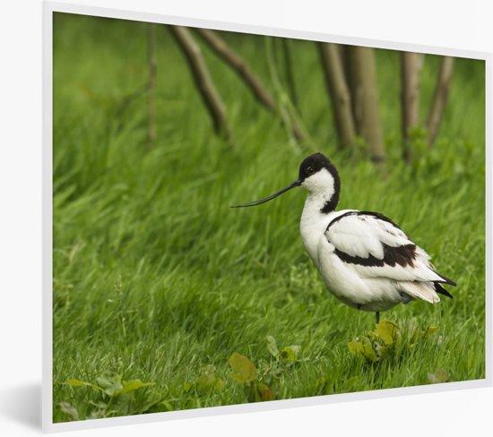 Foto in lijst - Kluut tussen het groene gras fotolijst wit 40x30 cm - Poster in lijst (Wanddecoratie woonkamer / slaapkamer)