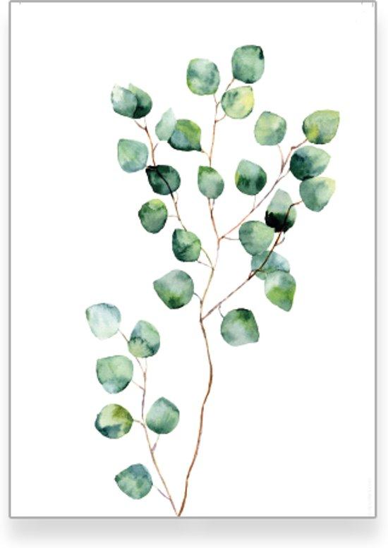 textposterscom gunnii botanisch poster woonkamer slaapkamer muurdecoratie 50x70