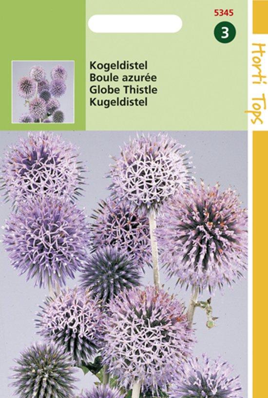 Hortitops Zaden - Kogeldistel (Echinops Ritro)