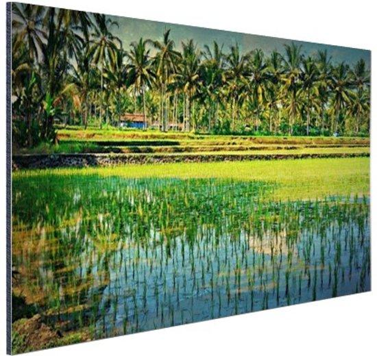Rijstvelden en palmbomen in Azie Aluminium 90x60 cm - Foto print op Aluminium (metaal wanddecoratie)