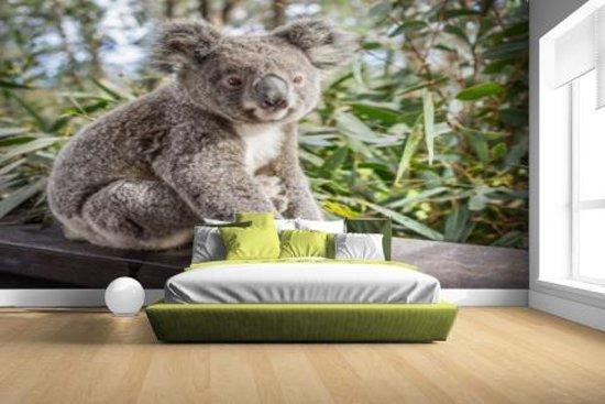 Zittende koala in Australie Fotobehang 380x265