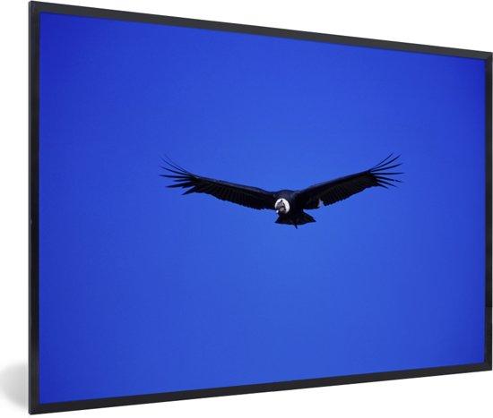Foto in lijst - Een Andescondor in de blauwe hemel fotolijst zwart 60x40 cm - Poster in lijst (Wanddecoratie woonkamer / slaapkamer)
