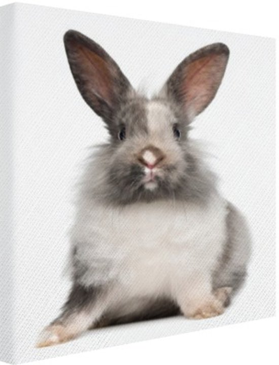 Zittend konijn fotoafdruk Canvas 60x80 cm - Foto print op Canvas schilderij (Wanddecoratie woonkamer / slaapkamer) / Dieren Canvas Schilderijen