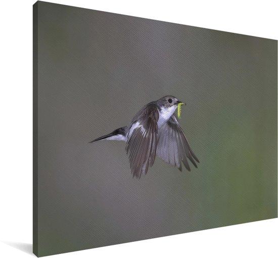Een donkere bonte vliegenvanger met een prooi in zijn bek in Duitsland Canvas 120x80 cm - Foto print op Canvas schilderij (Wanddecoratie woonkamer / slaapkamer)