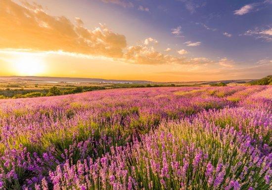 Papermoon Lavender Field Vlies Fotobehang 350x260cm 7-Banen