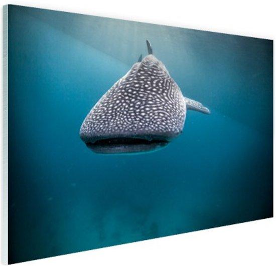 Walvishaai Glas 120x80 cm - Foto print op Glas (Plexiglas wanddecoratie)