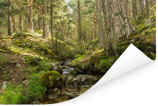 Bemoste boomstammen in het Nationaal park Sierra Guadarrama in Spanje Poster 90x60 cm - Foto print op Poster (wanddecoratie woonkamer / slaapkamer)
