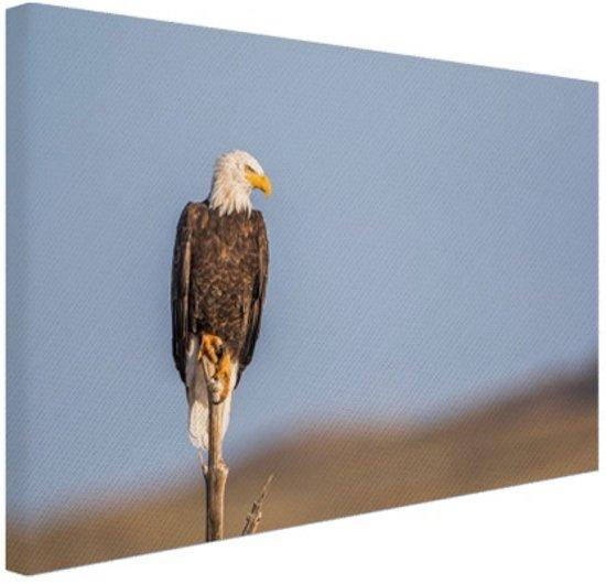 Adelaar op stok Canvas 30x20 cm - klein - Foto print op Canvas schilderij (Wanddecoratie woonkamer / slaapkamer) / Dieren Canvas Schilderijen