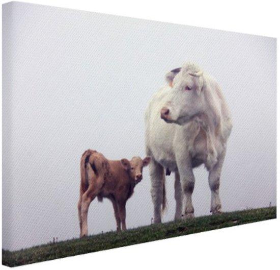 Koe met kalf in de mist Canvas 30x20 cm - Foto print op Canvas schilderij (Wanddecoratie)