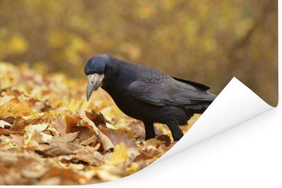 Roek tussen de herfstbladeren Poster 180x120 cm - Foto print op Poster (wanddecoratie woonkamer / slaapkamer) XXL / Groot formaat!