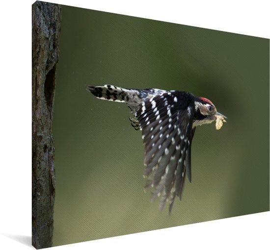 Foto van een kleine bonte specht die voedsel in zijn bek heeft Canvas 140x90 cm - Foto print op Canvas schilderij (Wanddecoratie woonkamer / slaapkamer)