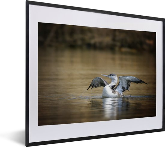 Foto in lijst - Red-throated duiker in het bruine water fotolijst zwart met witte passe-partout 50x40 cm - Poster in lijst (Wanddecoratie woonkamer / slaapkamer)
