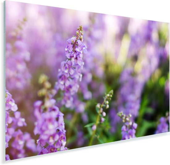 Close up van de hele lavendel Plexiglas 120x80 cm - Foto print op Glas (Plexiglas wanddecoratie)