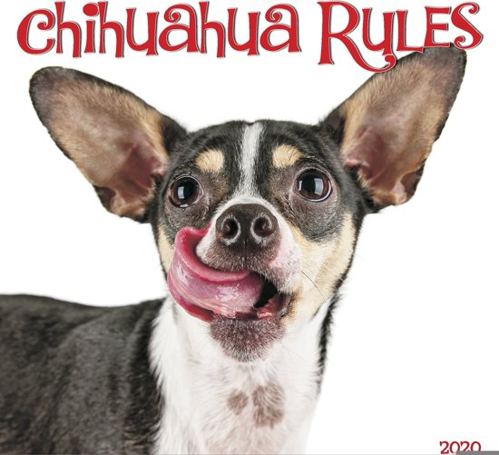 Chihuahua Rules Kalender 2020 Mini