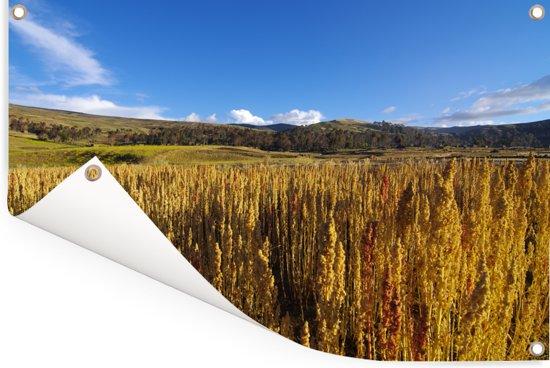 Uitstrekte vlakte met gouden quinoa planten Tuinposter 120x80 cm - Tuindoek / Buitencanvas / Schilderijen voor buiten (tuin decoratie)