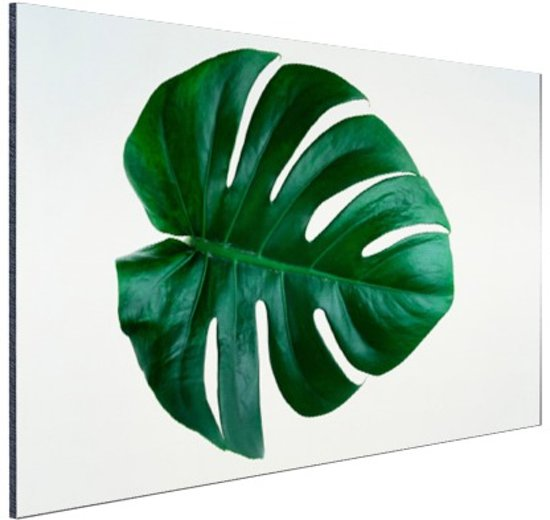 Gatenplant blad botanisch Aluminium 60x40 cm - Foto print op Aluminium (metaal wanddecoratie)