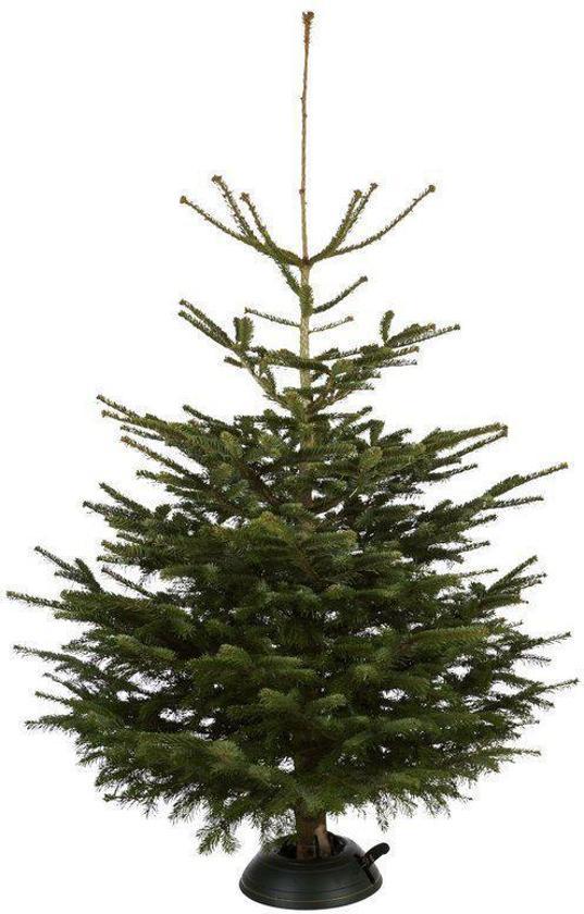 Bol Com Nordmann Echte Kerstboom Ca 175 Cm